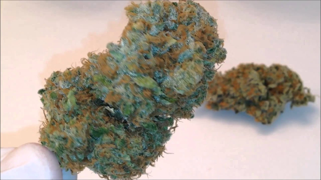 bud vid   girl scout cookies amp blue dream   youtube