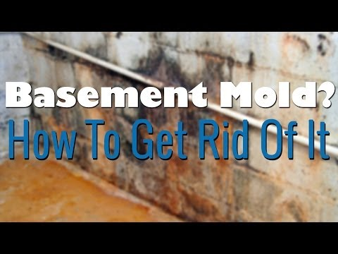 Basement Mold Removal - How To Remove Mold