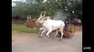 mattu vandi  panthayam funny win