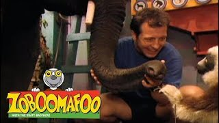 Zoboomafoo 101 - The Nose Knows (Full Episode)  Episode 1 100
