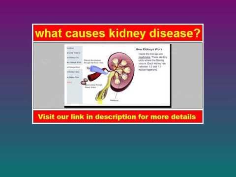 What Causes Kidney Disease