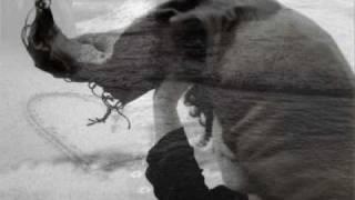 Watch Amedeo Minghi Alla Leggera video