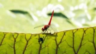Watch A Band Of Bees A Minha Menina video