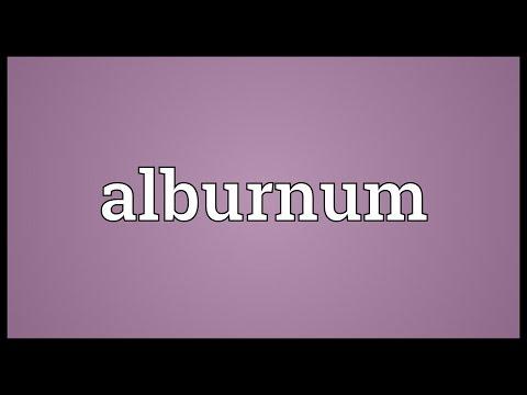 Header of alburnum