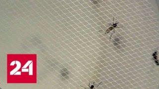 В Турции появились комары, переносящие лихорадку Зика - Россия 24
