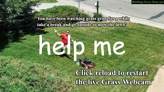 Watching Grass Grow for 100 Minutes to Celebrate 100 Subscribers