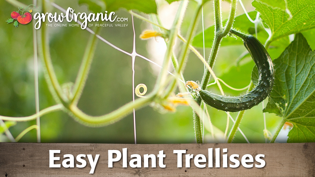 Vertical gardening easy plant trellises youtube for Easy garden plants to look after