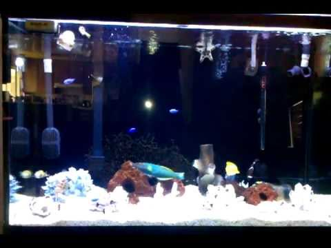110 Gal. Fish-Only Saltwater (Private Residence)