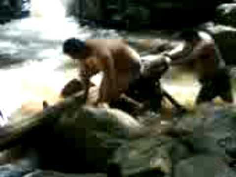 gorilas apareandose   youtube