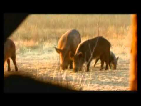Hog Hunting Gamo Hunter Extreme Air Rifle Part