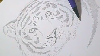 Tutorial - Como desenhar tigres / How to draw tigers