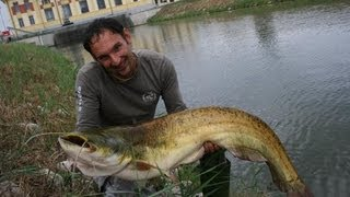 WELS CATFISH IN SPINNING WITH SPOON - HD by CATFISHING WORLD