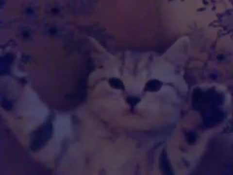 Моя кошка Марго.