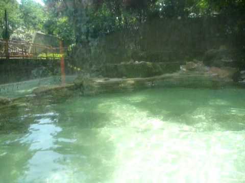 泳ぐビーバー♪(千葉市動物公園)