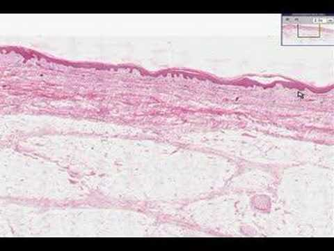 Shotgun Histology Introduction