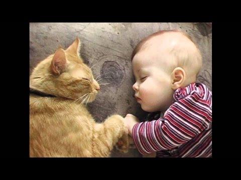 Приколы дети и животные  Усатые няни