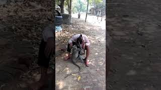 Relationship with animals...monkey and a human