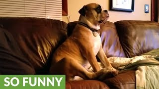 Owner engages in hilarious argument with his dog