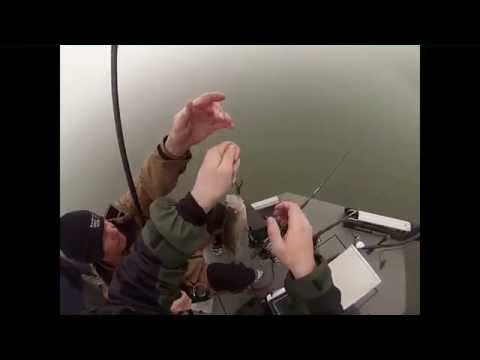 Kentucky Lake Crappie Fishing
