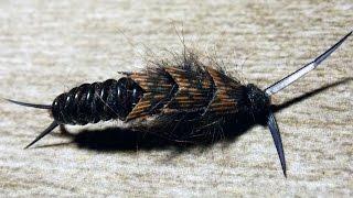 Kauffmann Stone - stonefly nymph fly tying instructions by Ruben Martin