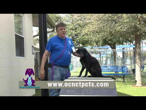 Orange County Animal Services - I Volunteer Because . . . Mike