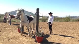 Dressage in the Pillars - Clinic Arizona February 2016