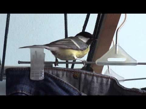 Как поймать птицу на балконе. - дизайны балконов - каталог с.