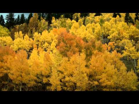 Kingston Trio - Aspen Gold