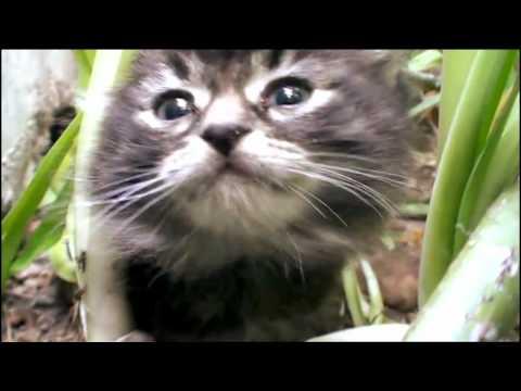 Animal Rescue Rspca 9 8 2010 Part2