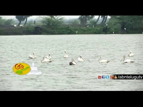 Beauty of  West Godavari | Kolleru Lake, Kunkullamma Temple | Day 1 | AP Tourism