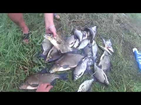 дикая рыбалка в московской области