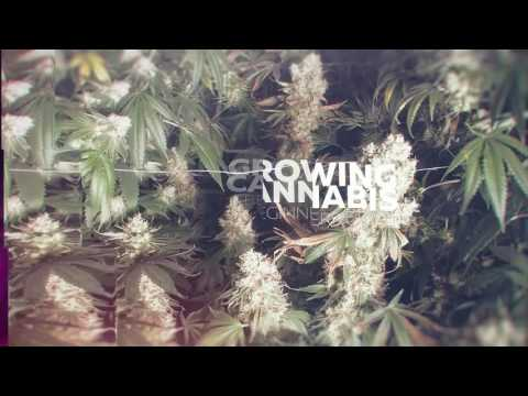 From Clones to Curing A Beginners Guide to Growing Cannabis Teaser Trailer