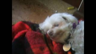 I feed my dog some ham