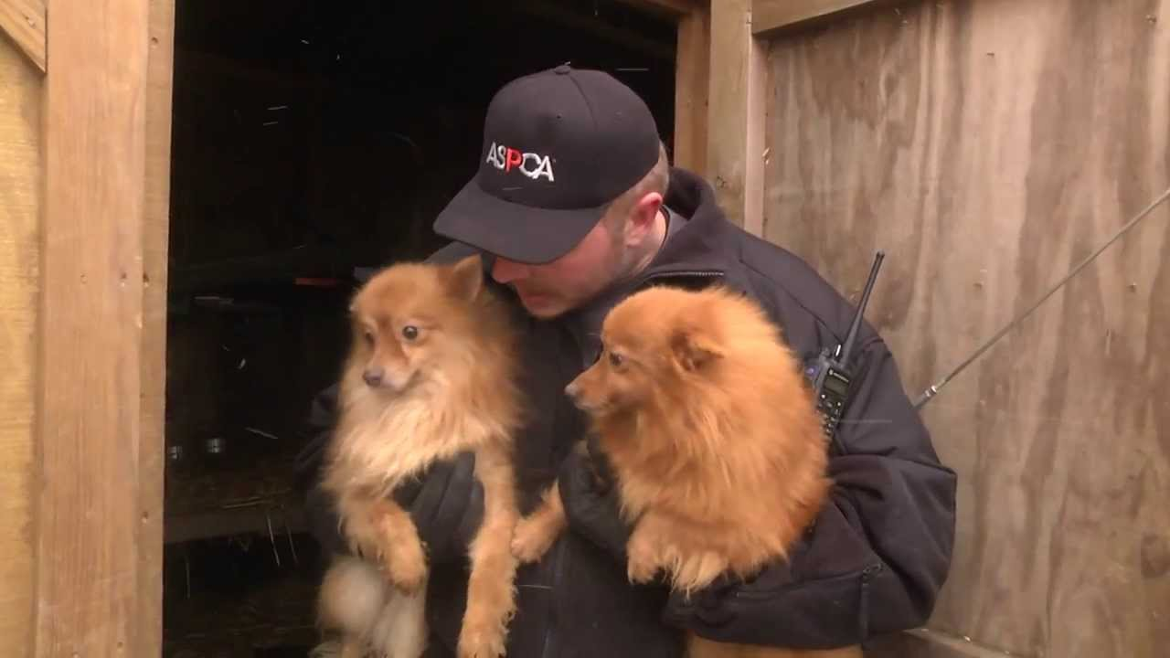 Kentucky Search And Rescue Dogs