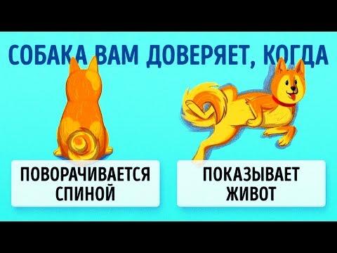 16 Приемов Для Тех, Кто Всегда Мечтал Понимать Собак