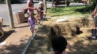 Emmy petting bunnies