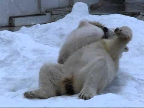 札幌円山動物園、ホッキョクグマの赤ちゃん 2011 #3 【HS210】