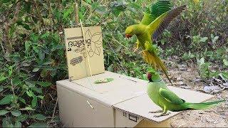 Best Creative Bird Trap Make from Cardboard