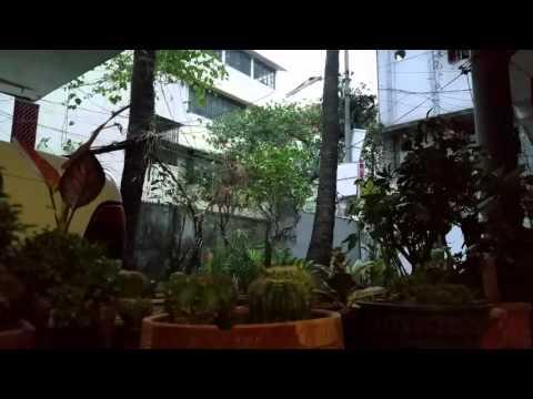 Time-lapse morning, Hafsa's Garden, Dhaka, Bangladesh.