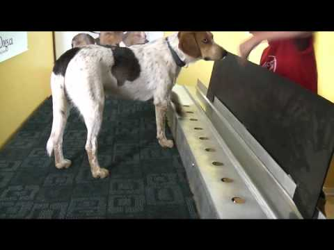 Cancer Detection Dogs Training
