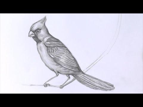 Видео как нарисовать синичку поэтапно
