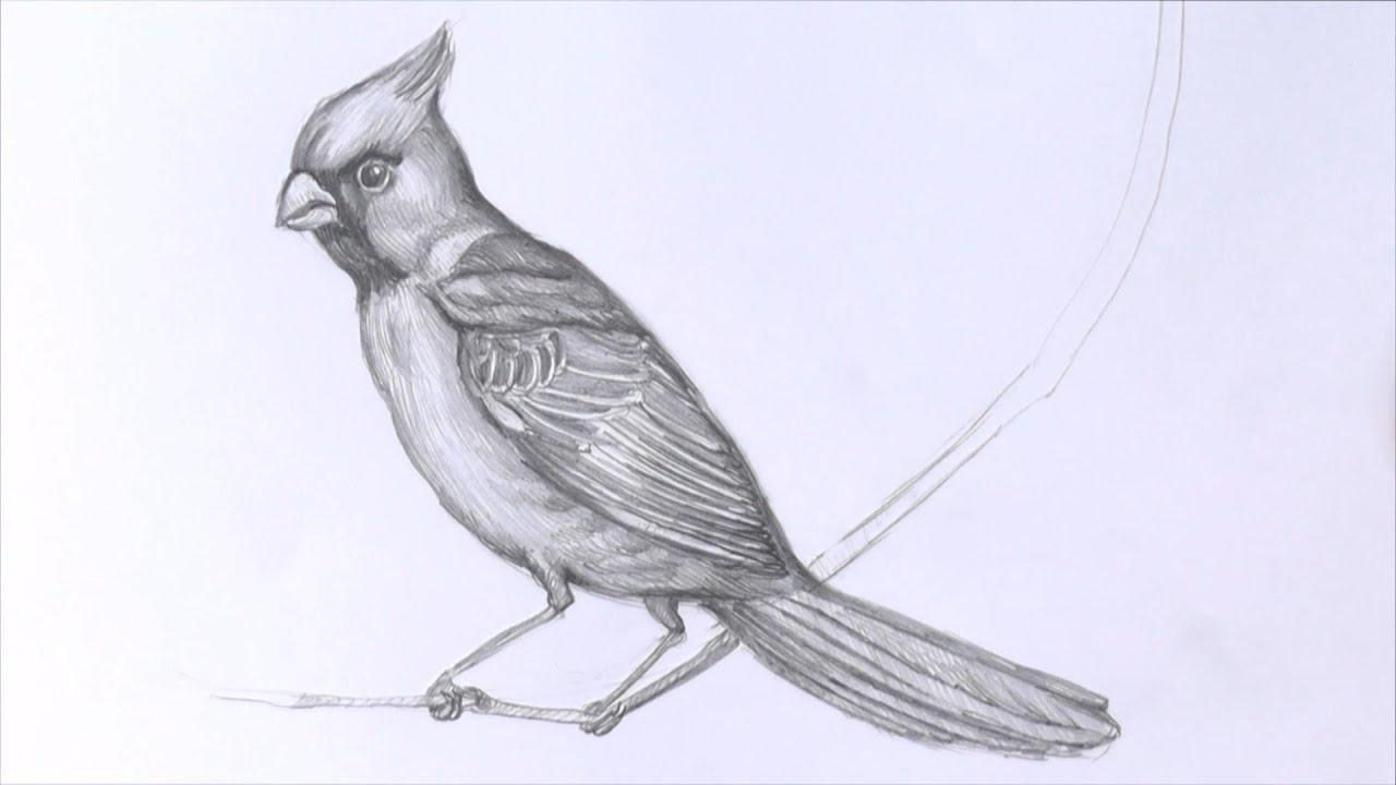 Рисунки арт птиц