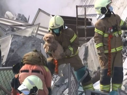 Raw: Dog Rescued From Rubble After Taiwan Quake
