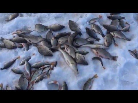 рыбалка на реке чулыме