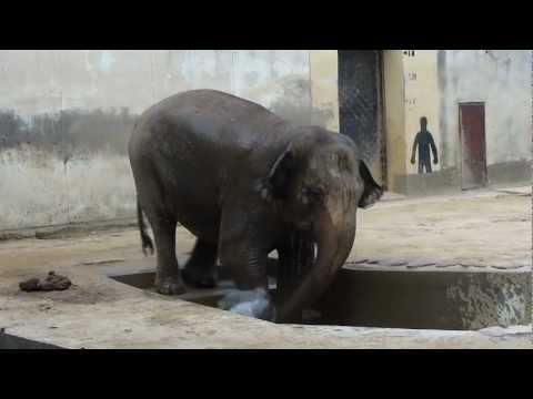 王子動物園の象もこの暑さで水浴びしてた 2011.06.24