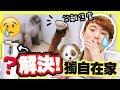 【解決狗狗焦慮症!】Brownie和Muffin獨自在家中也不怕!?(中文字幕)