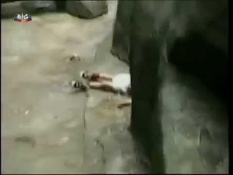 Criança caiu dentro da jaula dos gorilas, o pânico surge e ninguém esperava o ia acontecer!
