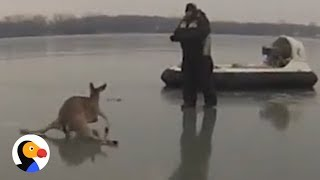 Deer Hoverboard Rescue: Father and Son Save Deer Stuck on Ice | The Dodo