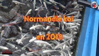 Normandie koi en 2018