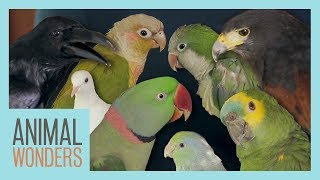All Of Our Birds!